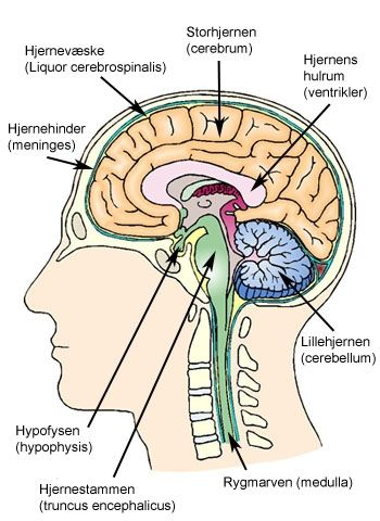højre hjernehalvdel styrer