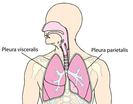 kan man leve med en lunge