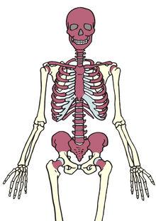 hvor mange knogler har vi i kroppen