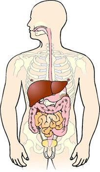 tarmene i kroppen